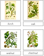 Tree Matching Cards (English)