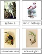 Bird Matching Cards (English)