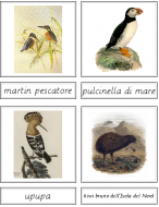 Bird Matching Cards (Italian)