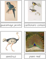 Bird Matching Cards (Spanish)