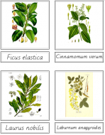 Tree Matching Cards (Latin)