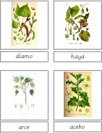 Tree Matching Cards (Spanish)